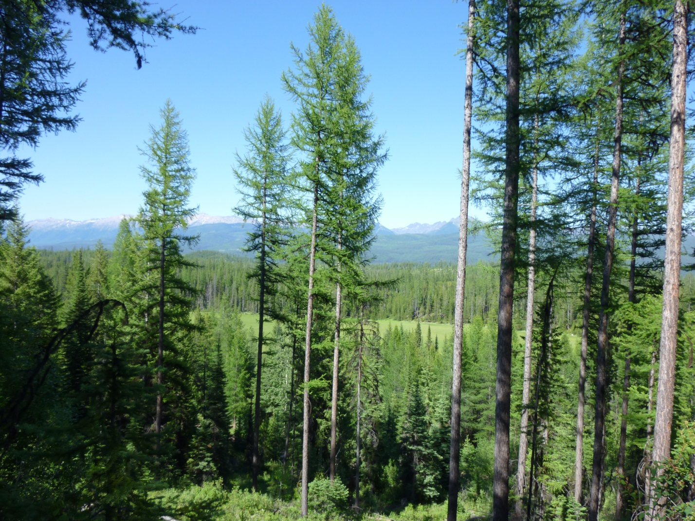 Marshall Creek Wildlife Management Area, 640 acres along Deer Creek in Seeley Lake area acquired by Montana Fish Wildlife and Parks and incorporated into the over 24,000 acre Wildlife Management Area.